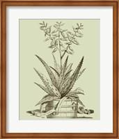 Vintage Aloe III Fine Art Print