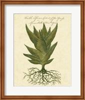 Thornton Exotics I Fine Art Print