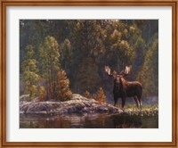 North Country Moose Fine Art Print