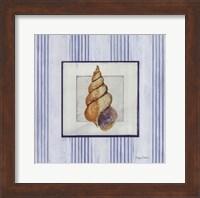 Sanibel Shell II Fine Art Print