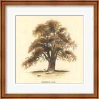 Common Oak Fine Art Print