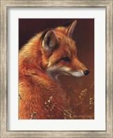 Curious Red Fox Fine Art Print