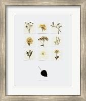 White Lilacs Fine Art Print