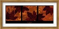 Liquid Amber Fine Art Print