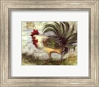 Le Rooster IV Fine Art Print