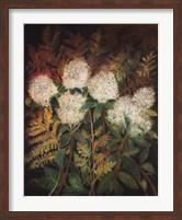 Hydrangeas and Ferns Fine Art Print