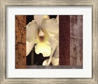 Tropical Whites I Fine Art Print