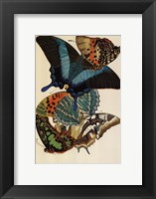 Collection III Fine Art Print