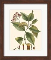 Crimson Botanical I Fine Art Print