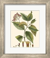 Crimson Botanical I Fine Art Print