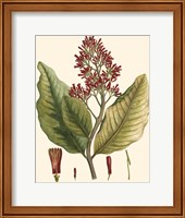 Crimson Botanical II Fine Art Print