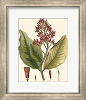 Crimson Botanical II Fine Art Print