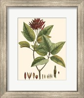 Crimson Botanical IV Fine Art Print