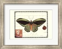 Butterfly Prose II Fine Art Print