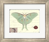 Butterfly Prose VI Fine Art Print