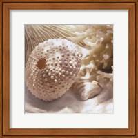 Coral Shell I Fine Art Print