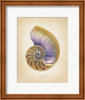 Nautilus Cross Section Fine Art Print