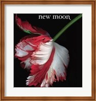 Twilight 2: New Moon (Book Cover) Wall Poster