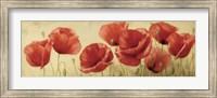 Poppies Grace II Fine Art Print