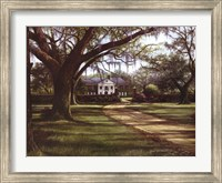 Stately Passage Fine Art Print