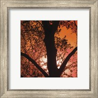 Sunset Forest I Fine Art Print