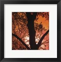 Sunset Forest I Fine Art Print