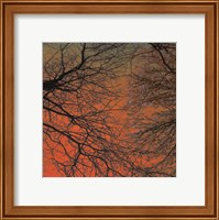 Sunset Forest III Fine Art Print