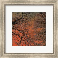 Sunset Forest III Fine Art Print