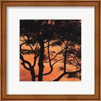 Sunset Forest IV Fine Art Print