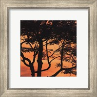 Sunset Forest IV Fine Art Print