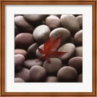 Leaf on Stone Fine Art Print