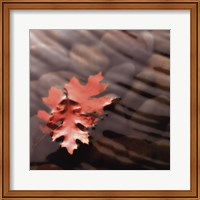 Leaves in Stream Fine Art Print