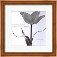 Tulip Beauty Fine Art Print