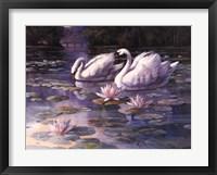 Swans and Bridge Fine Art Print