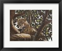 Serengeti Leopard Fine Art Print