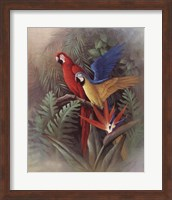 Exotic Birds Fine Art Print
