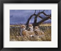 Cheetah and Cubs Fine Art Print