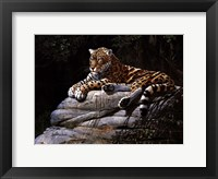 Jaguar on Rock Fine Art Print