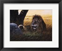 Serengeti Lion Fine Art Print