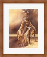 Family of Giraffes Fine Art Print