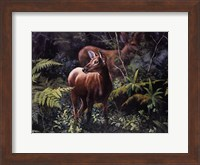 Black - Tailed Deer Fine Art Print