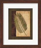 Palm Tropical III Fine Art Print