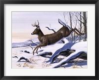 Young Buck Fine Art Print
