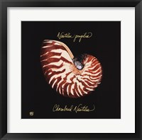 Striking Shells II Fine Art Print