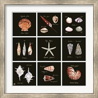 Striking Shells 9-patch Fine Art Print