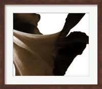Reveal on White II Fine Art Print