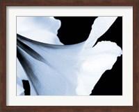Reveal on Black II Fine Art Print
