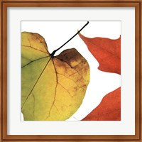 Inflorescent Leaves I Fine Art Print
