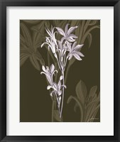 Jewel Stems II Fine Art Print