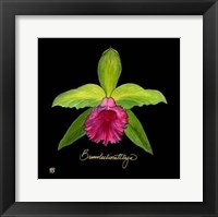 Vivid Orchid I Fine Art Print